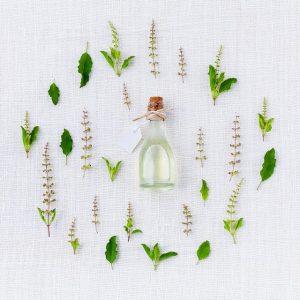huile-essentielle-basilic