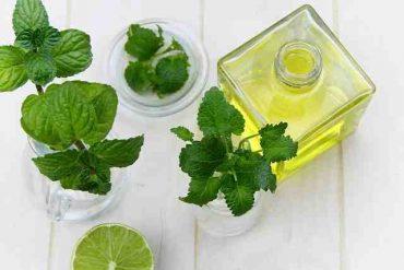Comment faire de l'huile essentielle de menthe poivrée ?