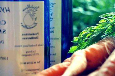 Quelle est la plante la plus efficace pour maigrir ?