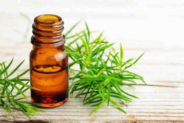 Comment utiliser huile essentielle tea tree pour infection urinaire ?