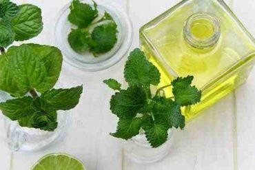 Comment utiliser l'huile d'Arnica ?